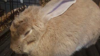 Link the Rabbit
