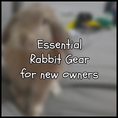 New Rabbit Owner supplies