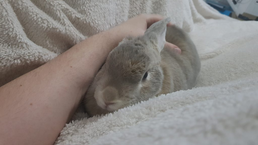 A rabbit having bed cuddles whilst loafed