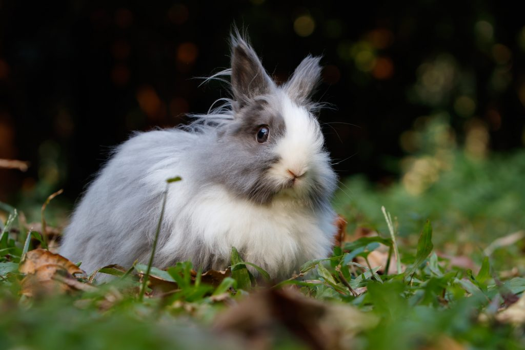Rabbit outside pooping