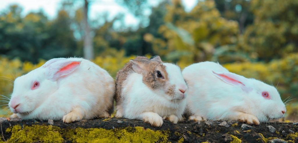 Picking a rabbits name