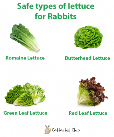 What types of Lettuce can rabbits eat?
