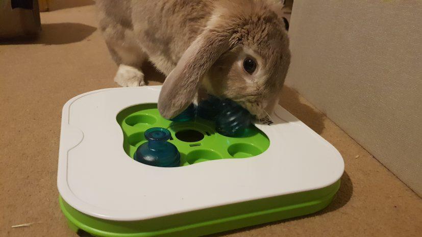 Interactive Rabbit Toy